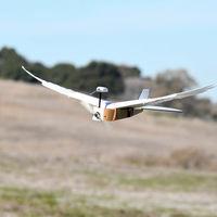 Parece una paloma y vuela como paloma, pero en realidad es una asombrosa ave robótica con plumas reales