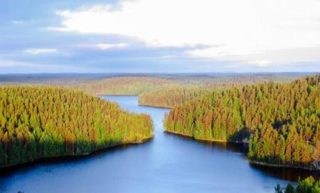 Repoveden Kansallispuisto Kesayonauringossa