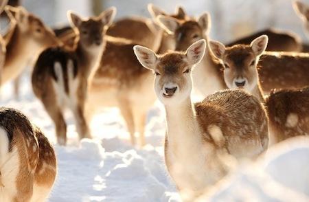 escenas-de-nieve-1.jpg