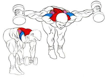 Ejercicios para fortalecer el hombro (III): orden de los ejercicios