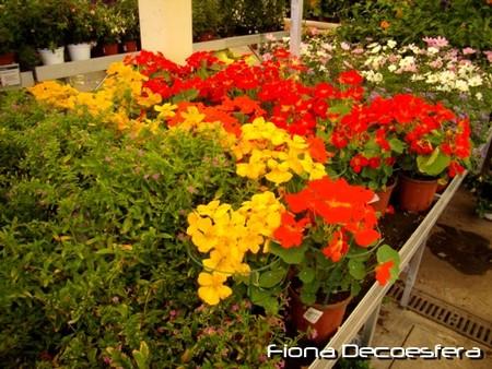 Zona de flor
