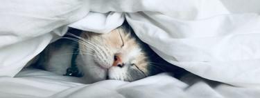 Así es como una dieta saludable te ayuda a dormir mejor (y los alimentos que deberías evitar antes de irte a la cama)