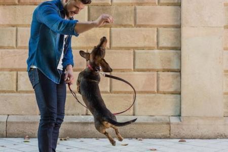Perros felices (y a la moda) de la mano de Brott Dog Barcelona