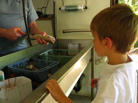 La alergia al pescado ocupa el tercer lugar de incidencias alérgicas en niños