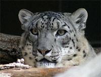 Leopard en la WWDC