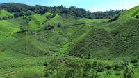 Té y trekking en Cameron Highlands, Malasia