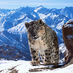 Planet Earth II, con voz Attenborough, te demuestra que el mundo es fascinante