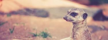 El animal más violento con su propia especie no es el ser humano, sino éste