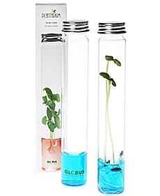 Plantas en tubos de ensayo