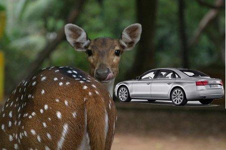 Ecología, ciervos y Audi A8