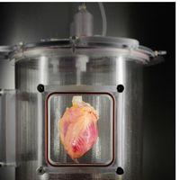Utilizando células adultas de la piel se logra regenerar tejido funcional del corazón