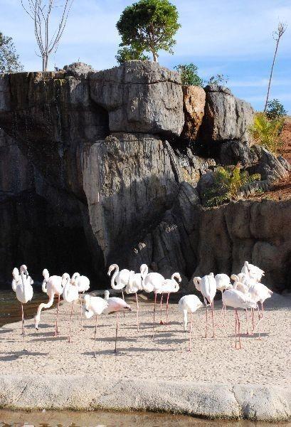 Bioparc Valencia abre sus puertas a final de mes