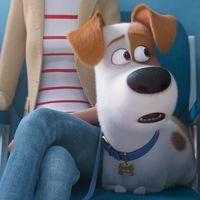 'Mascotas 2' lanza su primer tráiler y presenta el mayor temor de los protagonistas: ¡el veterinario!