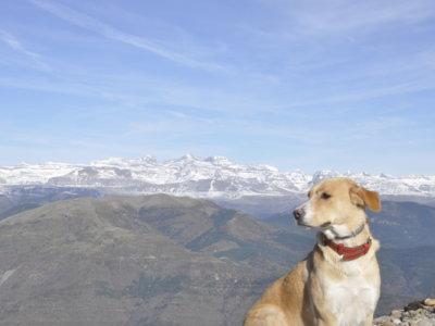 Cómo encuentran los perros el camino a casa (sin GPS)