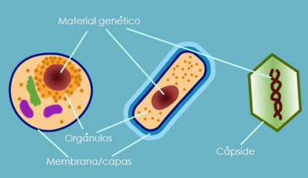 Tipos de células y virus