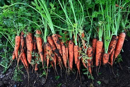 Beneficios De La Zanahoria Para Tu Salud Como Lograr Anaranjado
