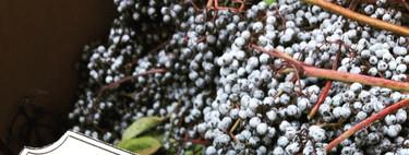 Analizamos las bayas de saúco, el nuevo alimento tendencia