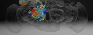 21 millones de imágenes para rastrear el cerebro de una mosca a nanoescala