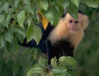 El ansia de carne de los monos