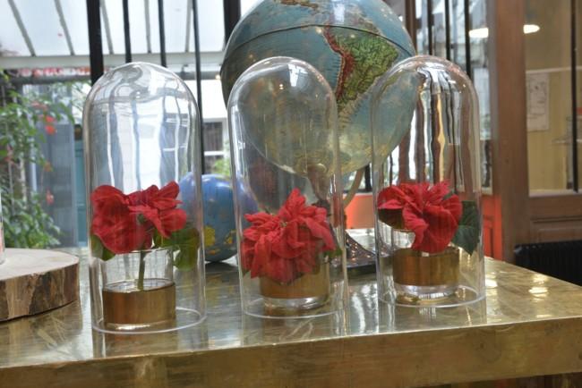 Poinsettia Con Capsulas