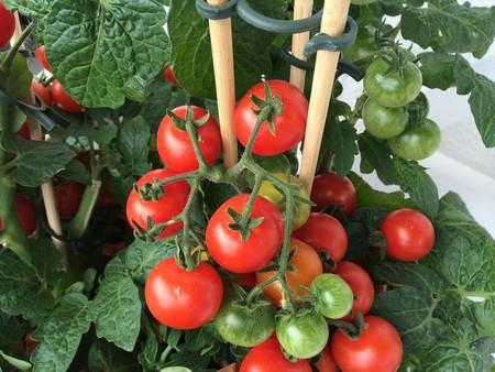 Vegetable 874028 1920
