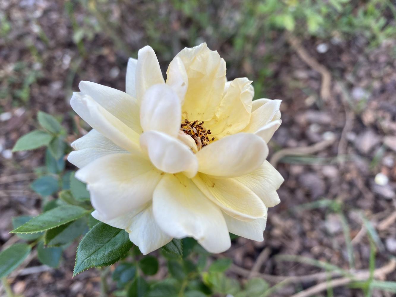 Foto de Fotos tomadas con el iPhone 11 Pro (22/106)