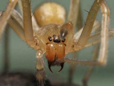 Cómo una inofensiva arañita puede provocar que falle tu auto