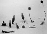 La asombrosa inteligencia del moho del fango