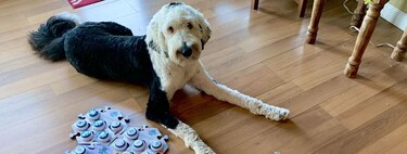 En Tiktok hay una perra que habla. Y está causando una revolución en la investigación animal