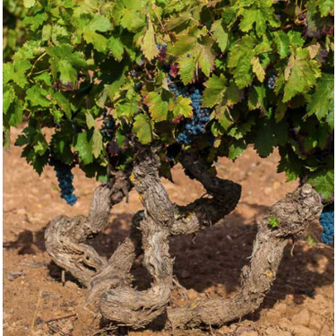 """Los jefazos de la D.O. Ribera de Duero: """"Todos los vinos españoles juntos seríamos una de las empresas más importantes del país"""""""