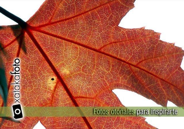 El otoño ya está aquí. 35 fotos para inspirarte
