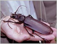 Quiz Genciencia: solución insectos gigantes