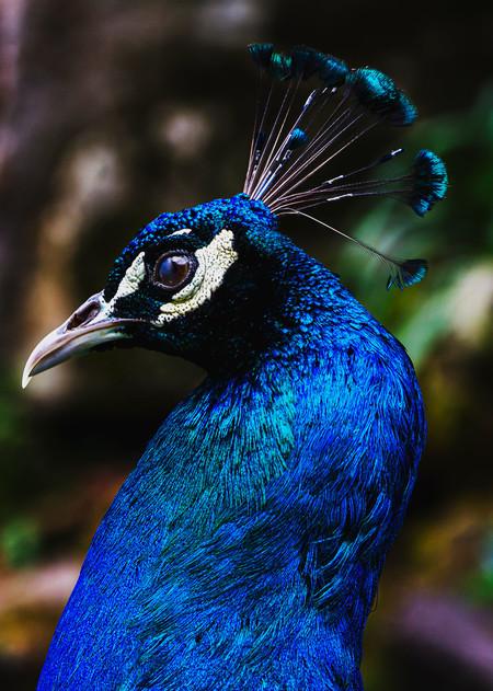Aves 002