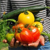 Lugares donde puedes conseguir verduras de huerto orgánicas en CDMX