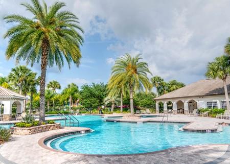 Palm Trees Paradise Pool Poolside 261105