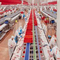 Por qué los mataderos son el nuevo epicentro mundial de contagios de coronavirus