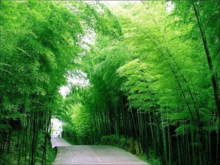 Carretera con bambú
