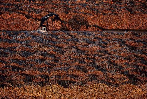 Foto de La tierra desde el cielo - © Yann Arthus-Bertrand (1/37)
