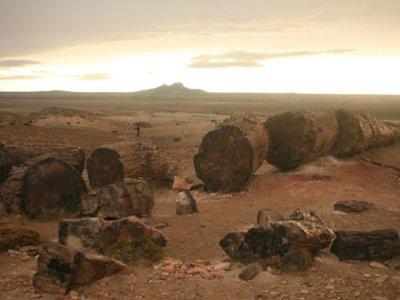 Parque Nacional Jaramillo: Un bosque con  150 millones de años de historia en la Patagonia argentina