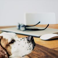 El experimento que demostró que tener un perro ayuda a relacionarse mejor con los demás