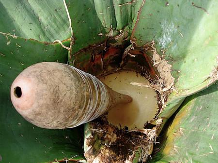 Bebidas mexicanas tradicionales, Primera parte.