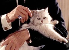 Los cat-café se modernizan en EEUU: acariciar gatos como un supervillano mientras tomas un capuchino está de moda