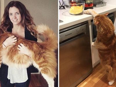 Internet ya tiene nuevo emperador: un gato de 120 centímetros llamado Omar que es el más largo del mundo
