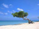 Aruba divi