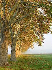 10 millones de árboles