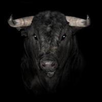 El fotógrafo Julien Charlon mira a los toros a los ojos y nos regala retratos nunca vistos