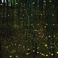 Las luciérnagas se están extinguiendo por culpa de tres amenazas producidas por los seres humanos