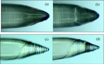 Estas agujas impresas en 3D tienen la quinta parte de grosor del cabello humano