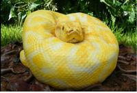 Snake Cake, un pastel terriblemente realista