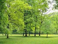 Los árboles nos pueden salvar la vida mejorando la calidad del aire que respiramos